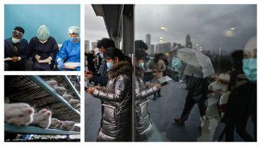 Docteurs au Vénézuela, élevage de visons au Danemark et vues de Chine (images d'illustration)