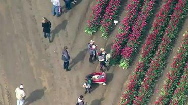 Découvrez en images la saison du Festival des tulipes... aux Etats-Unis