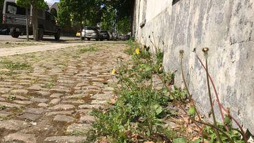 Nos trottoirs envahis par les mauvaises herbes qui doit - Desherber avec du sel ...