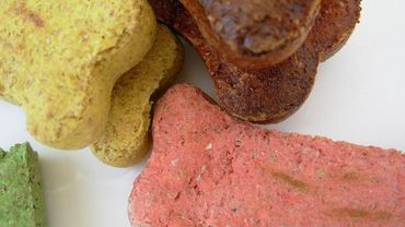 Ijsberg rappelle de la nourriture pour animaux pour présence d'OGM