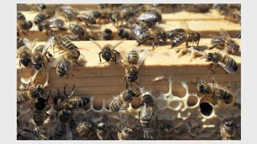 Gros plan d'une ruche d'abeilles