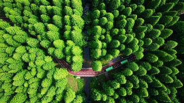 Cette vue aérienne a été prise dans le Yellow Sea National Forest Park à Dongtai, dans l'est de la Chine, dans la province de Jiangsu.