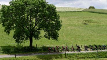 Il y a plus de 25.000 arbres remarquables recensés en Wallonie