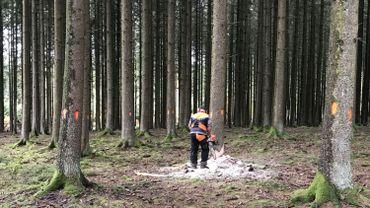 Les scolytes dérèglent le marché du bois