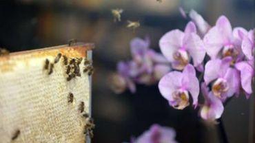 La commission propose une interdiction temporaire de certains pesticides nocifs pour les abeilles