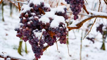 Primeurs de Bordeaux: le millésime 2017 atypique à cause du gel