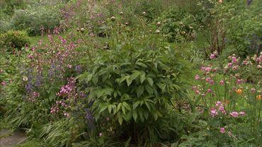 Le jardin semble très naturel mais Jacqueline veille au bon développement de chaque plante