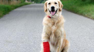 Mon animal peut-il aller aux urgences vétérinaires pendant le confinement ?