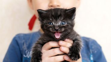 Pourquoi adopter un chat noir?