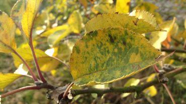 Un automne...sans feuilles mortes ?
