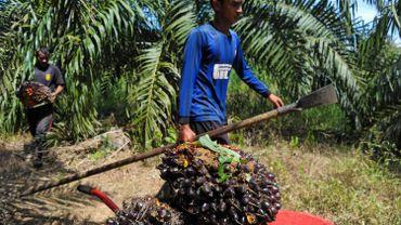 En matière d'huile durable, la palme revient ... à Nutella