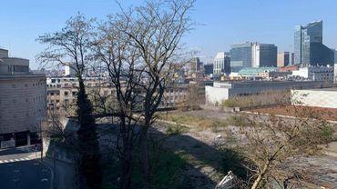 Des habitants dénoncent des abattages d'arbres illégaux sur l'ancien site de la Cité administrative