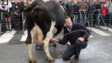 Un producteur trait sa vache devant le Conseil de l'UE, en 2009