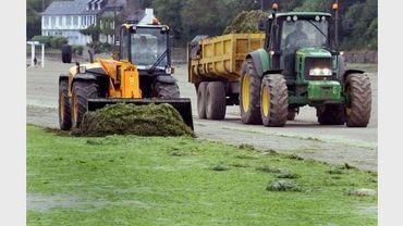 Opération de ramassage d'algues vertes à Saint-Michel-en-Grèves, en Bretagne, le 26 mai 2010