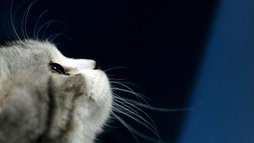 """La recherche d'un physicien français pour savoir si un chat peut être liquide et solide à la fois a été récompensée par les """"Anti-Nobel"""""""
