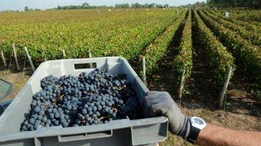 Des vignes à Pessac-Leognan près de Bordeaux, en septembre 2014