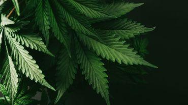 Un nouveau médicament d'aide au sevrage du cannabis