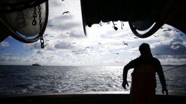 Brexit: le Royaume-Uni va délivrer 1500 autorisations provisoires aux pêcheurs européens