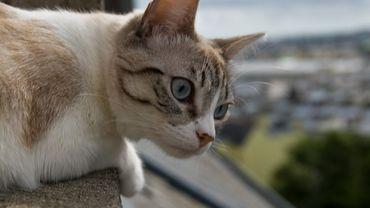 """Le """"sauveur de chat"""" s'est retrouvé à son tour coincé sur la toiture"""
