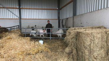Le fourrage pour nourrir les animaux d'élevage de plus en plus cher