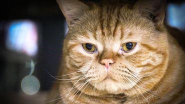 Un chat tout en rondeurs peut facilement dissimuler un secrétaire général des Nations unies..