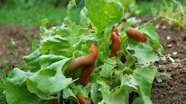 10 astuces écologiques pour lutter contre les parasites du jardin