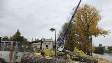 Parc de la Boverie: 11 arbres à abattre pour raison de sécurité