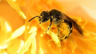 L'apiculture est en crise.