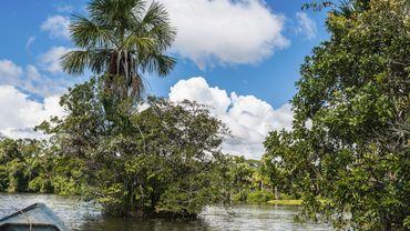 Escapade au coeur de l'Amazonie: Le parc national de Manú