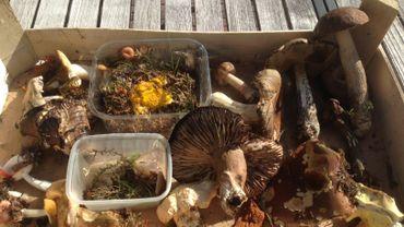 Un début de saison morose pour la cueillette des champignons
