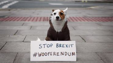 """Campagne """"The Wooferendum Is Coming"""""""