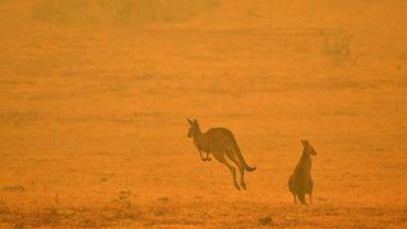 Des kangourous dans la fumée d'un feu de forêt près de Cooma, le 4 janvier 2020 en Australie.
