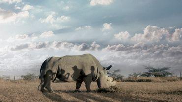 """""""The Last Male on Earth"""" : de l'importance du rhinocéros"""