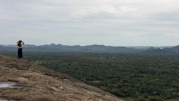 Le Sri Lanka veut faire passer de 28% actuellement à 32% sa couverture forestière.