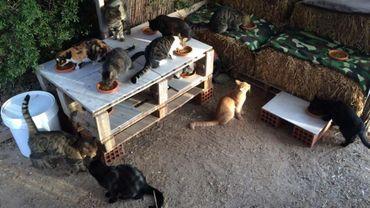 Voulez-vous être payé pour prendre soin de 55 chats sur l'île de Syros?
