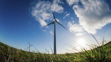 Pas d'éoliennes dans certaines plaine wallonnes pour protéger les oiseaux