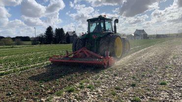 Un champ de 100.000 tulipes retourné à Incourt en Brabant wallon à cause du coronavirus