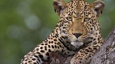 En route sur la piste des léopards en Afrique du sud