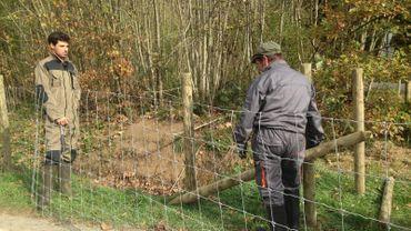 Installation de la 1ère clôture entre Valensart et Virton