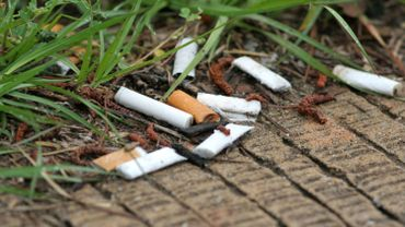Close-up of cigarette butts lying on a grass lined walkway