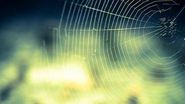Du tissu en fil d'araignée ?