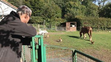 A la Ferme pour Enfants de Jette, il reste des chèvres, des poules et un cheval...mais plus aucun mouton!