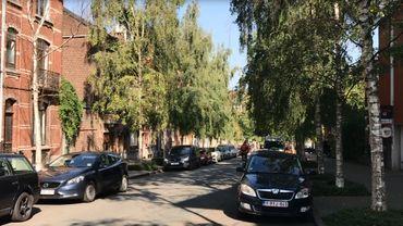 A Schaerbeek, les bouleaux de l'avenue Fortin seraient malades