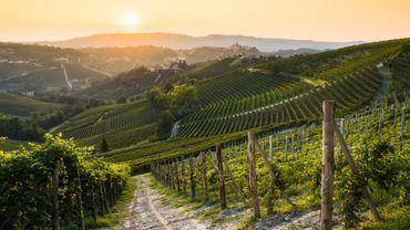 Quels sont les cépages qui pourraient sauver le vin face au réchauffement climatique ?