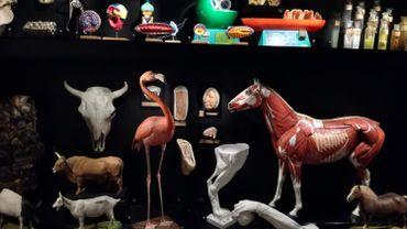Une partie du cabinet des curiosités du Musée L