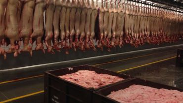 La Wallonie manque de cochons, viande la plus consommée en Belgique
