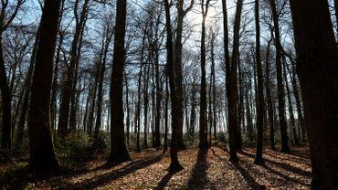 Plus de 100.000 arbres plantés en Wallonie picarde depuis 2015