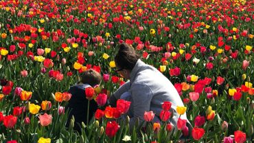 Les champs de fleurs en libre-service séduisent