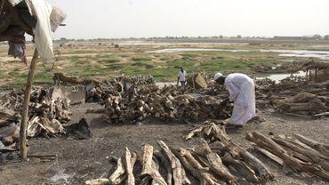 Le charbon de bois vendu chez nous vient à 90% d'Afrique