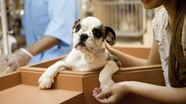 Adopter un animal de compagnie aujourd'hui : une formule revisitée plus efficace
